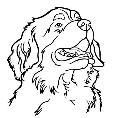 feuerkorb berner sennen hund dxf forum